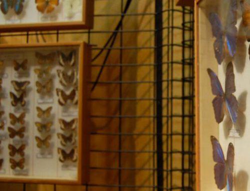 Riapertura del Museo di Storia Naturale di Macerata