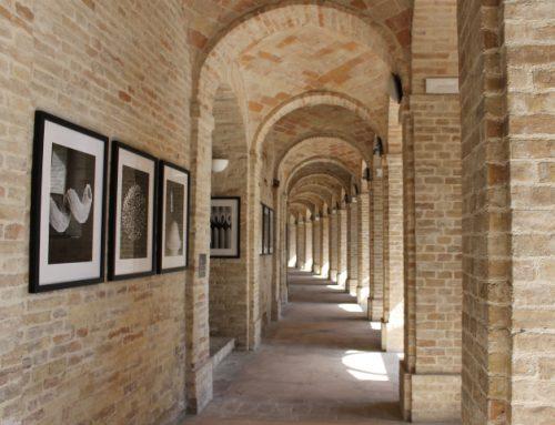 Da vicino | Fotografie di Daniele Duca | Sferisterio – Corridoio Innocenziano | 25 settembre 2021 – 9 gennaio 2022
